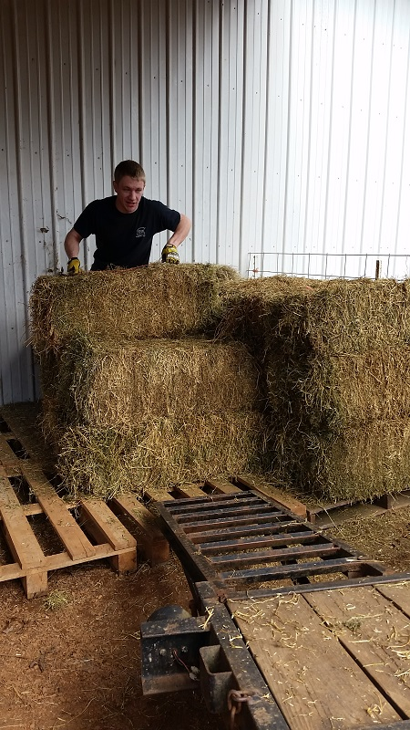 Jon moving hay