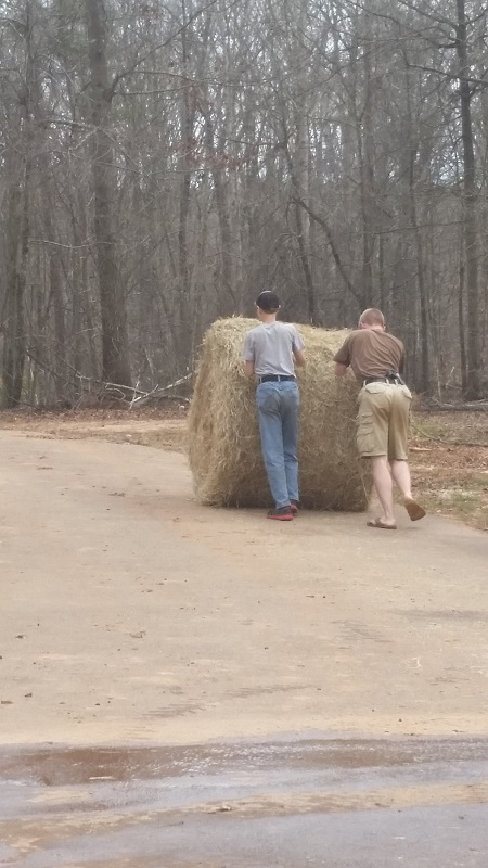 James and Jon helping with hay